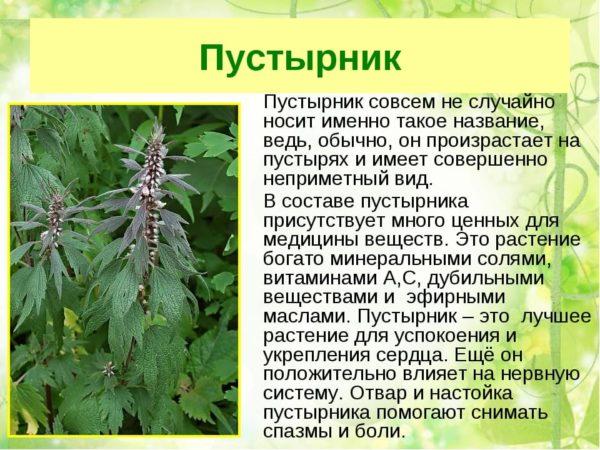 Травы от высокого артериального давления
