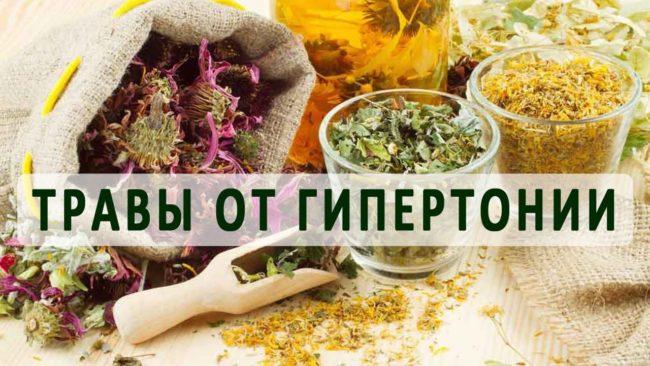 Народная медицина: травы, понижающие давление